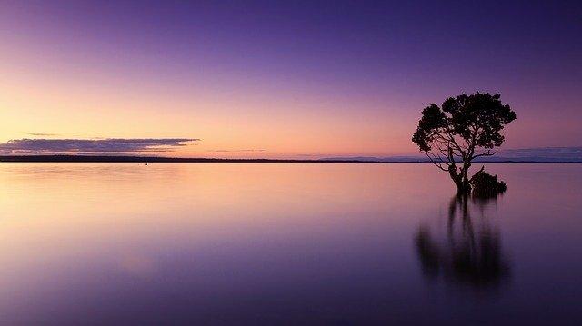 紫に光る水面に立つ木