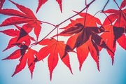 【スピッツ】ドラマ主題歌にも起用された『楓』に込められた想いや歌詞の意味とは?