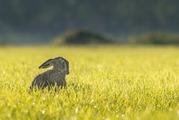 【スピッツ】広瀬すずが口ずさむ!映画主題歌としても起用された『歌ウサギ』について徹底解説!