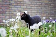 【映画】松岡茉優演じる「勝手にふるえてろ」主題歌を歌う黒猫チェルシーって?