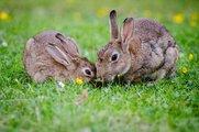 【the pillows】多くのバンドにカバーされ愛され続ける『Funny Bunny』の魅力とは?独自に徹底考察!