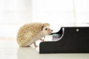 ピアニストの手の特徴とピアノに向いている手とは?