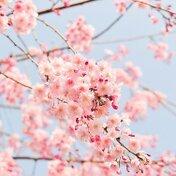 【11選】春に聴きたい!「出会い」と「別れ」の曲ランキング