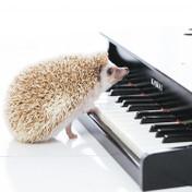 音楽用語「moderately」の意味を解説!