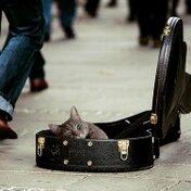 ギターケースについているカビを除去する方法!